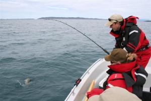 Blieb beim Makrelenfischen am Pilker hängen - ein hungriger Dorsch